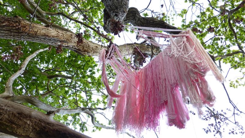 rosa garn hängande i skärvaskogen