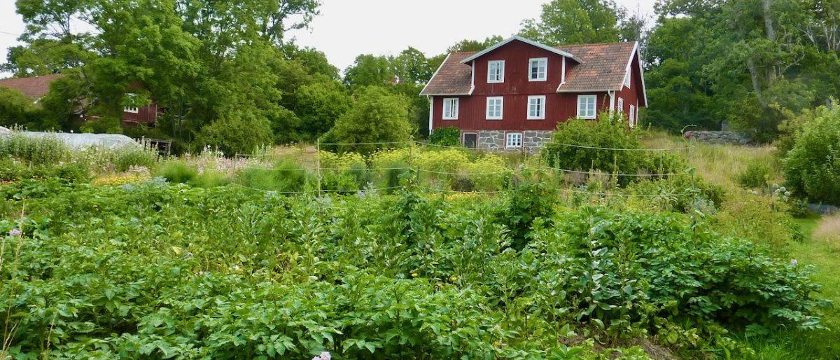 Permalänk till: Trädgård